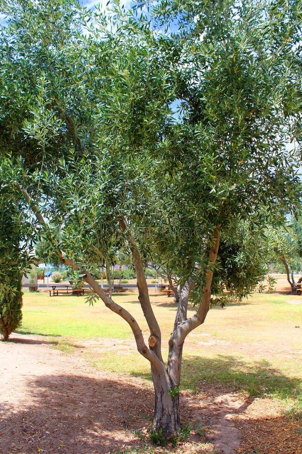 Medelhavs- trädgård, closeup filialen arkivbild
