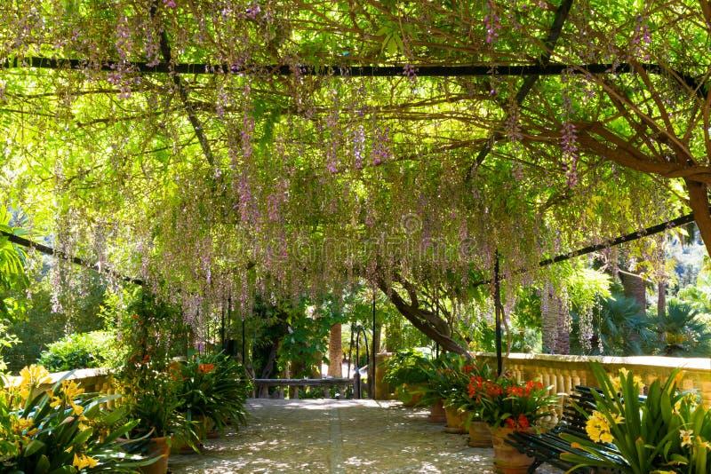 Medelhavs- trädgård på ön av Mallorca royaltyfri fotografi