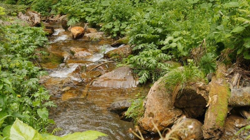 Подача вниз с чистой воды через камни в падении воды леса стоковая фотография