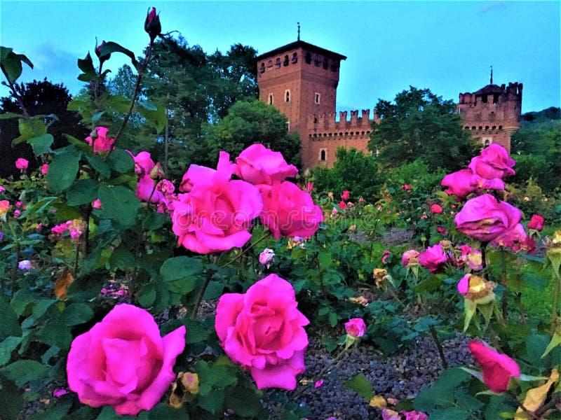 Medeltida slott av Valentine Park i den Turin staden, Italien Konst, historia, saga och rosa rosor royaltyfri bild
