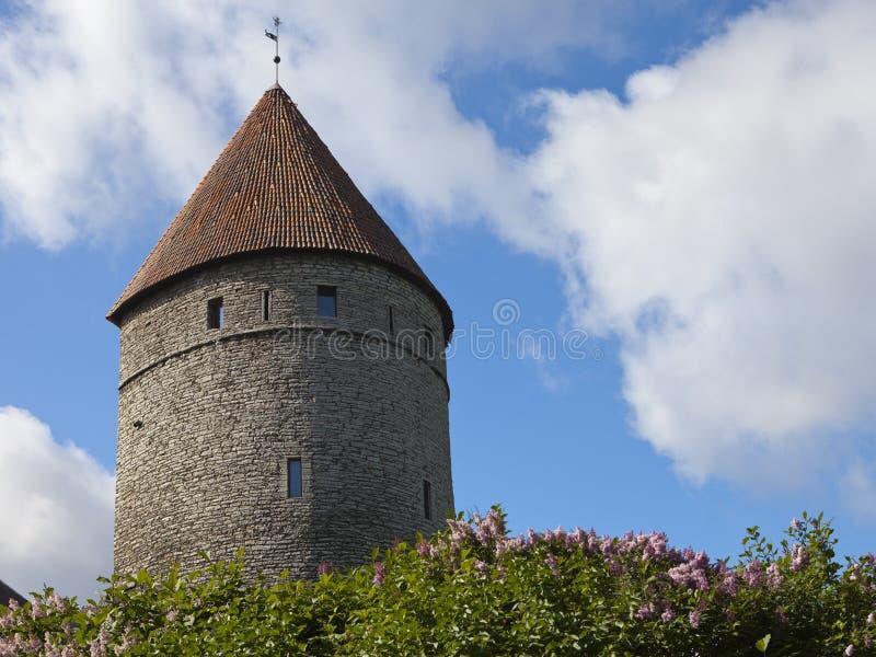 Medeltida torn, del av stadsväggen och den blomstra lilan fotografering för bildbyråer