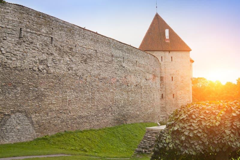 Medeltida torn, del av stadsväggen, Tallinn, Estland royaltyfri foto