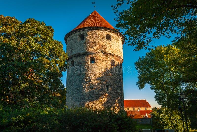 Medeltida torn i den gamla staden Tallinn, Estland arkivfoto