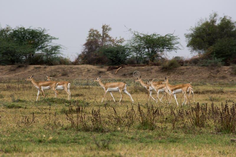 Medha印度羚圣所在艾哈迈达巴德,印度 库存图片