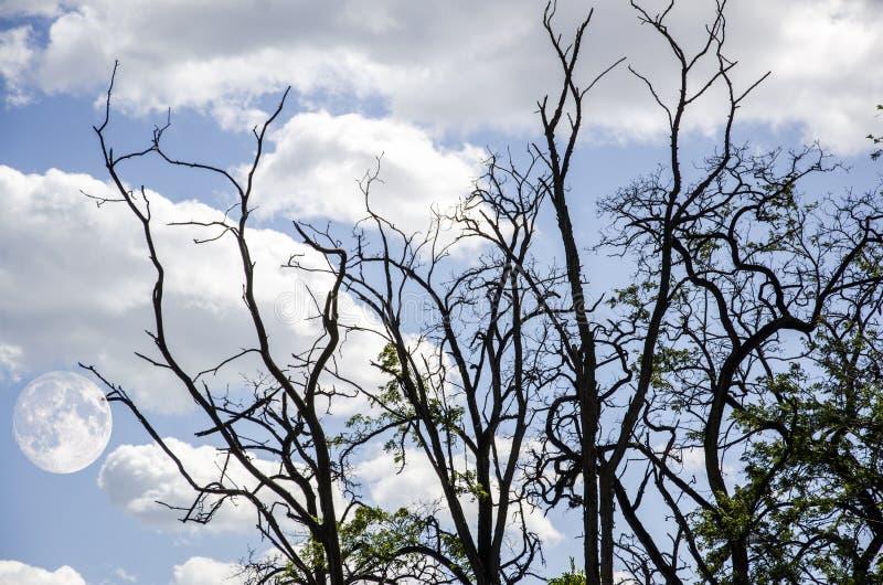 Mediados de árbol de Autumn Festival y Withered fotografía de archivo