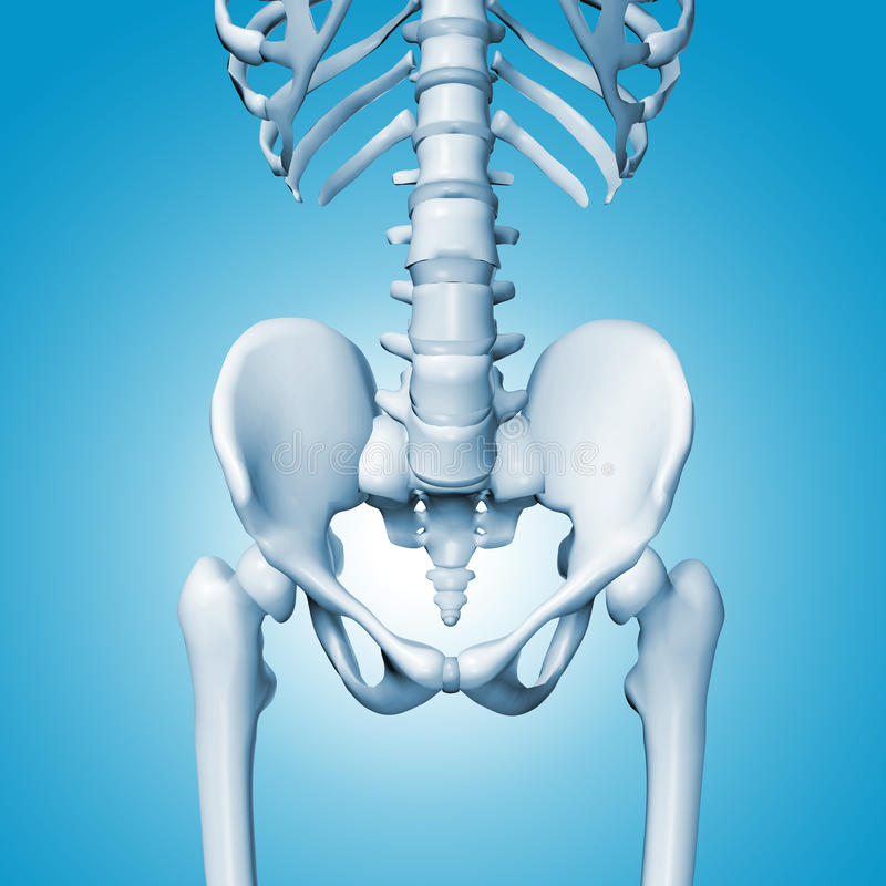 Medical accurate illustration of the hip. On a blue background stock illustration