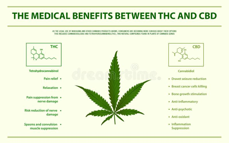 The medical benefits between THC and CBD horizontal infographic stock illustration