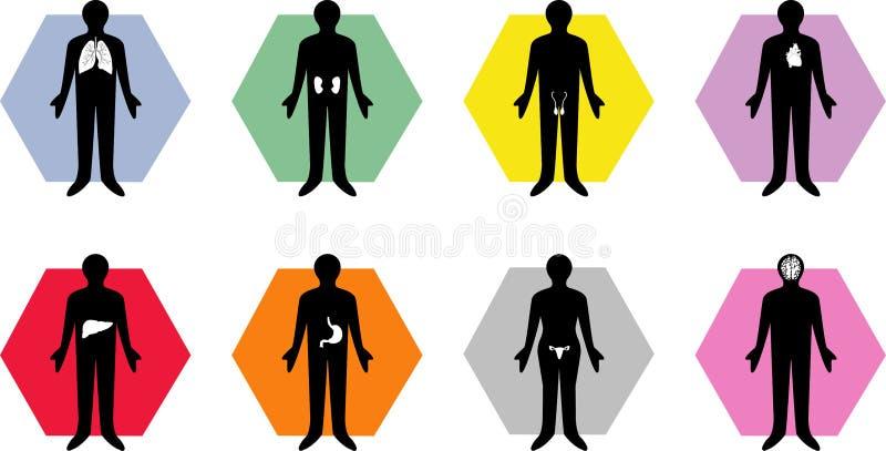 Medical body organ icons royalty free stock photos