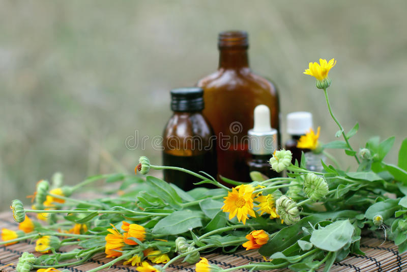 Download Medical calendula stock photo. Image of fresh, bottle - 11184844