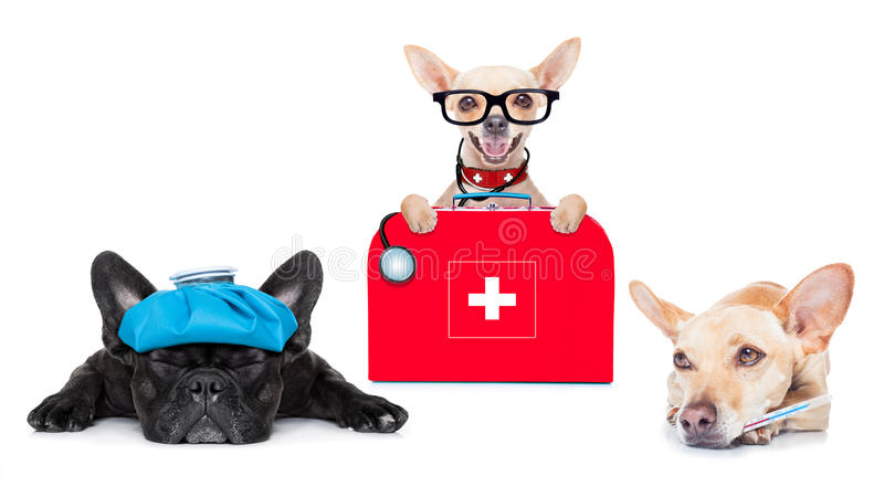 Medical doctor sick and ill dogs. Chihuahua dog as a medical veterinary doctor with stethoscope and first aid kit and a sick ill dog , on white background stock photos
