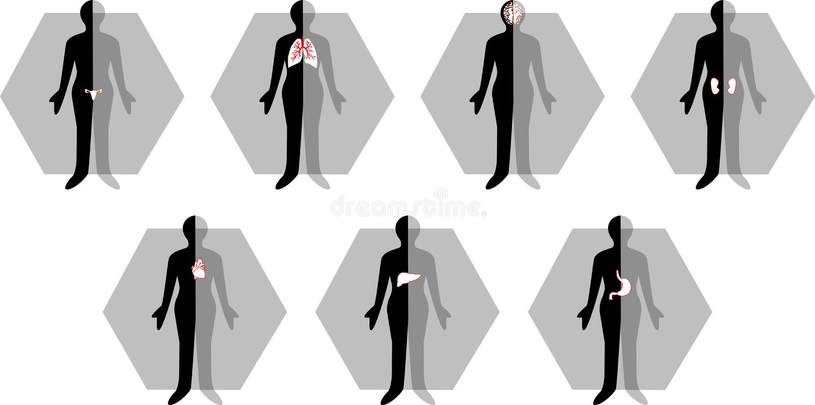 Medical female body icon royalty free stock images