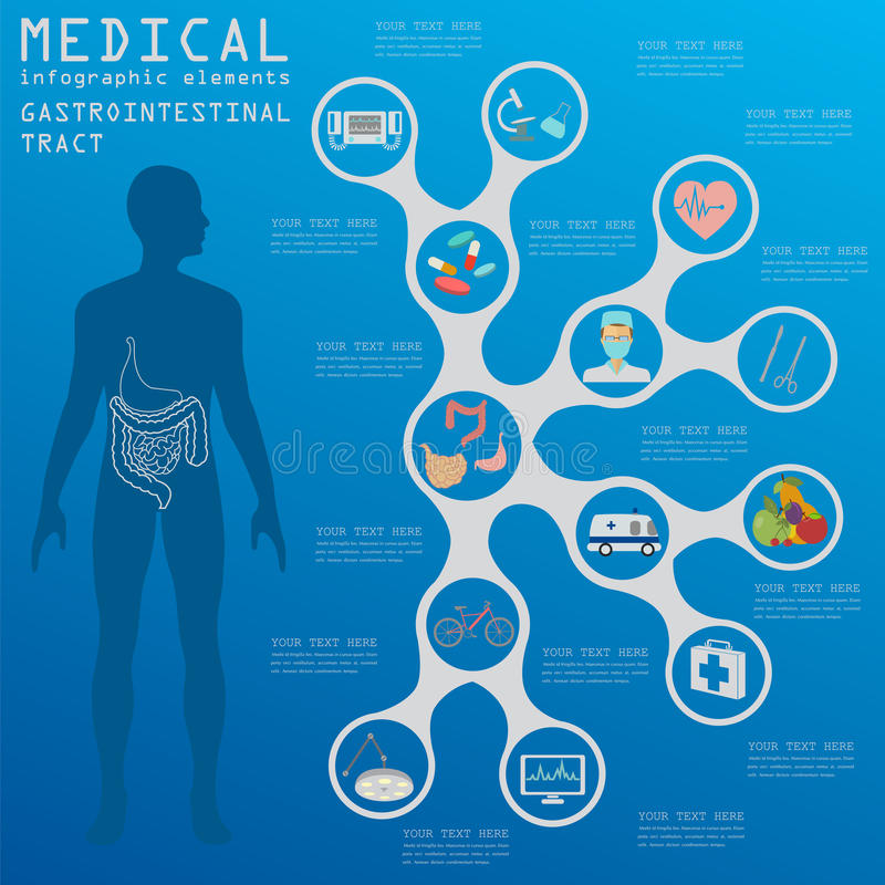 Medical and healthcare infographic, gastrointestinal tract infographic. S. Vector illustration vector illustration