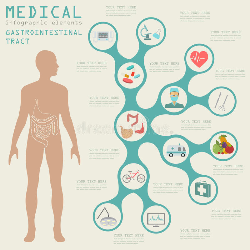 Medical and healthcare infographic, gastrointestinal tract infographic. S. Vector illustration royalty free illustration