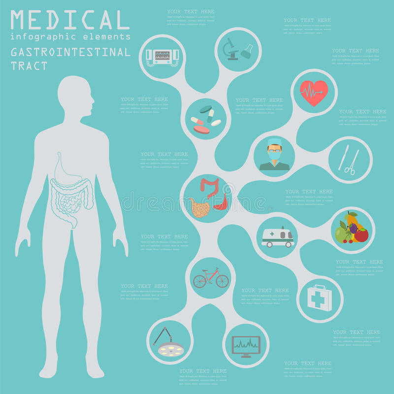 Medical and healthcare infographic, gastrointestinal tract infographic. S. Vector illustration stock illustration