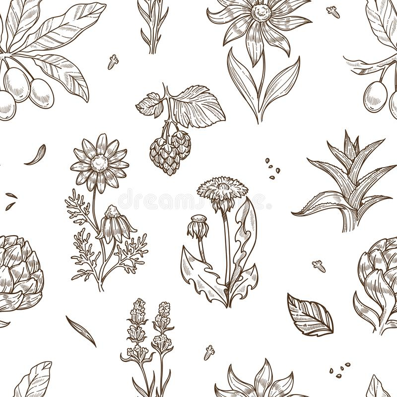 Medical herbs and herbal medicine plants sketch icons seamless pattern. royalty free illustration