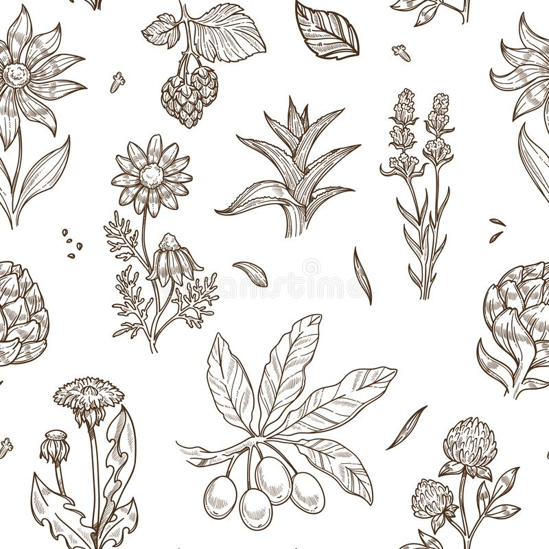 Medical herbs and herbal medicine plants sketch icons seamless pattern. vector illustration