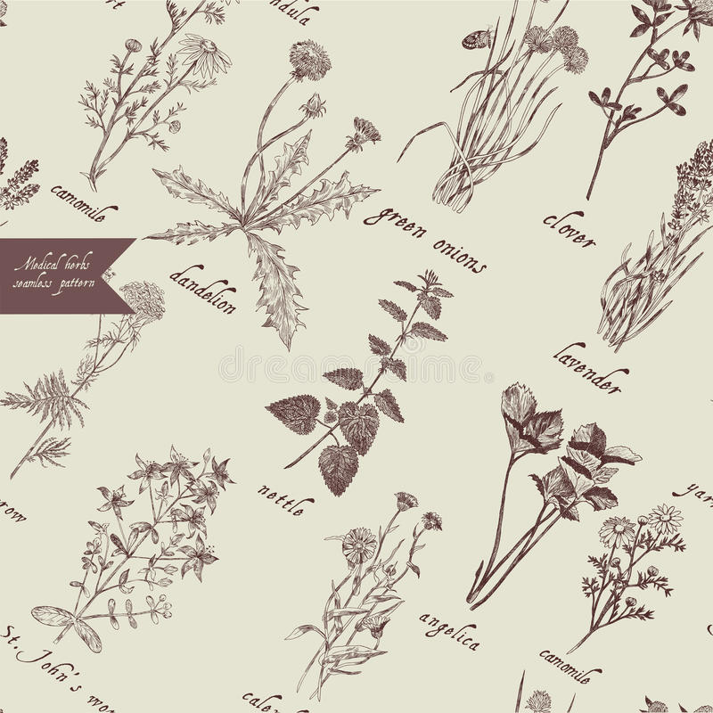 Medical herbs seamless pattern. Hand drawn vector. royalty free illustration
