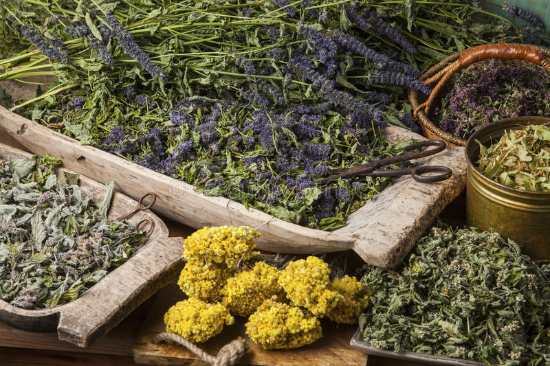 Medical herbs. Various dried medical herbs: mint, tilia flowers, anise hyssop, helichrysum arenarium stock images