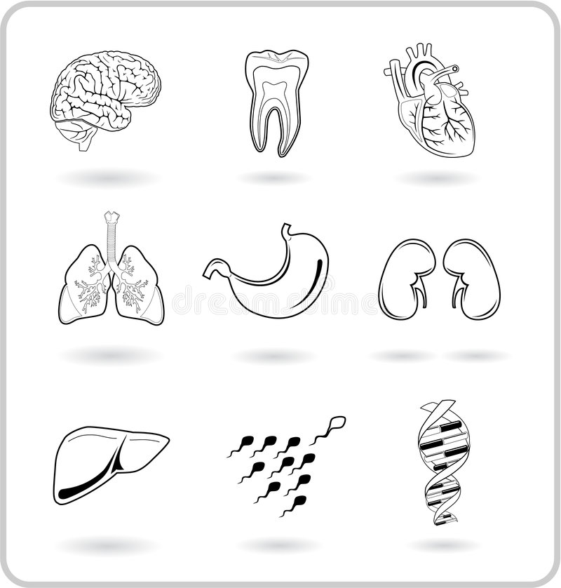 Download Medical icons stock vector. Image of background, lifestyle - 8058265