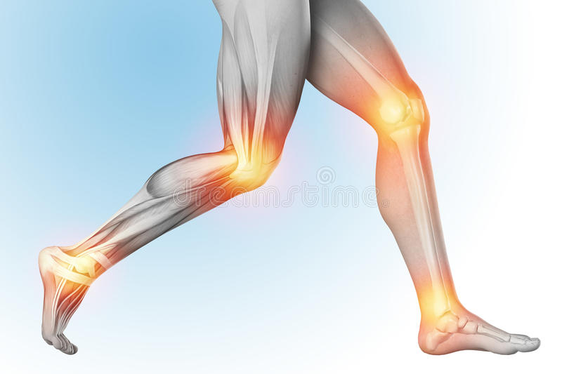 Medical illustration of a leg pain in anatomy transparent view. The skeleton, muscles, showing separate parts. 3d render.  vector illustration