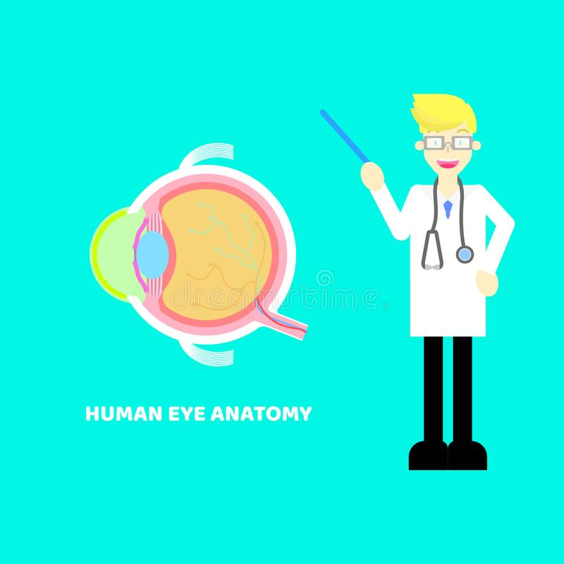 Medical internal organs body part nervous system anatomy surgery eyeballs health care with doctor,stethoscope in cyan background. Flat illustration cartoon royalty free illustration