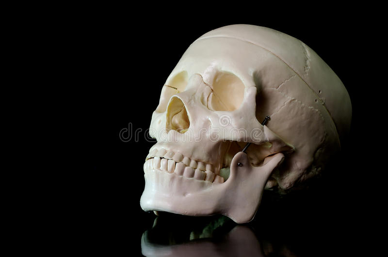 Skull on black background. Medical learning skull laying on a black background stock photos