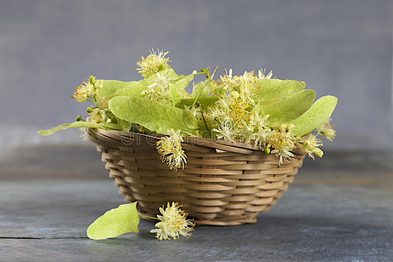 Medical Linden flowers in a basket stock photos