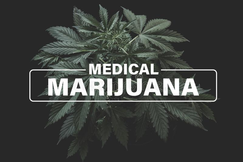 Medical marijuana, Growing cannabis indica, background green, marijuana leaves, marijuana vegetation plants hemp. Cultivation cannabis royalty free illustration