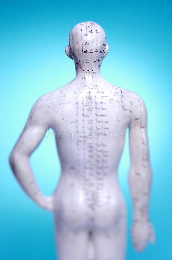 Medical Meridians Acupuncture Points. Model figure showing acupuncture or meridian points on a male torso stock image
