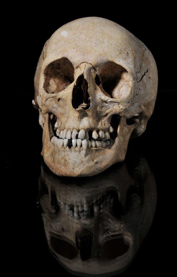 medical model of the human skull royalty free stock photo
