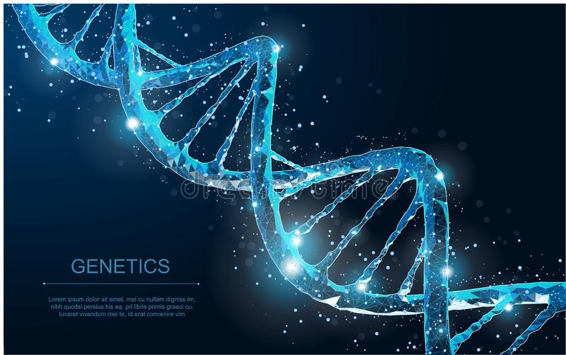 DNA. Abstract 3d polygonal wireframe DNA molecule helix spiral on blue. vector illustration