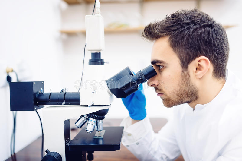 Medical scientist with microscope, examining samples and liquid in laboratory royalty free stock photography