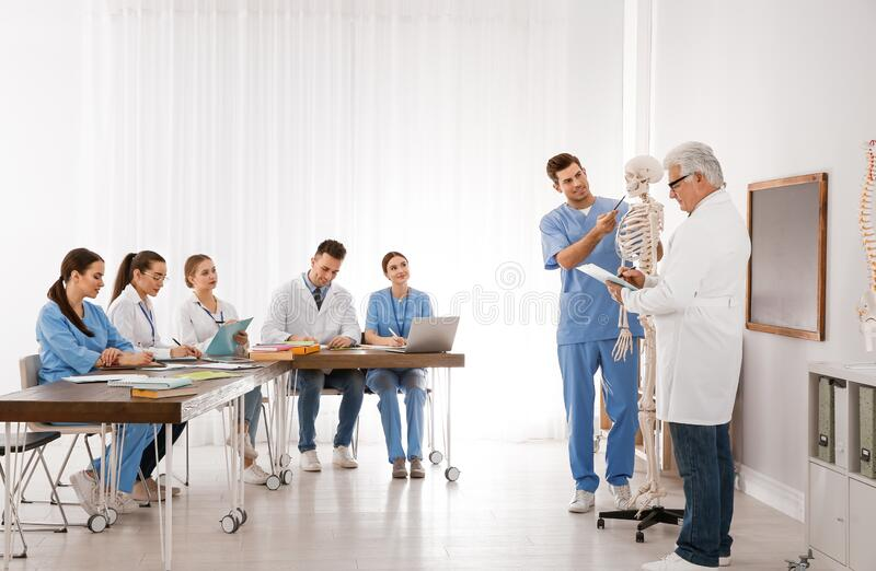 Medical students and professor studying human skeleton anatomy stock images