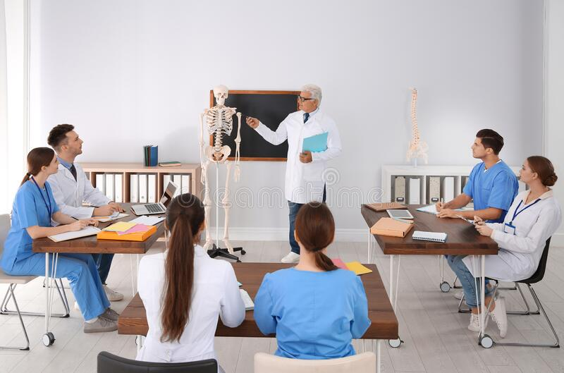 Medical students and professor studying human skeleton anatomy stock image