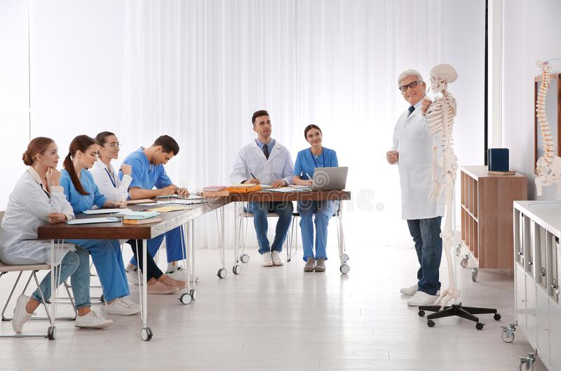 Medical students and professor studying human skeleton anatomy royalty free stock photo