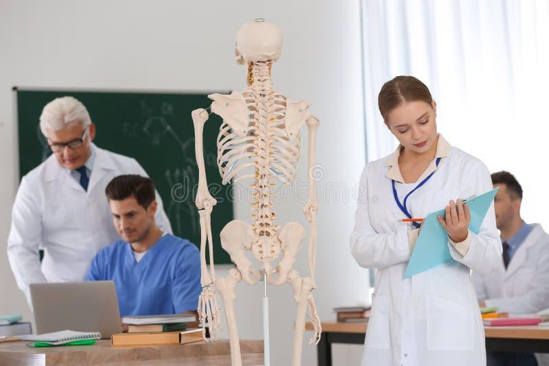 Medical students and professor studying human skeleton anatomy stock photos