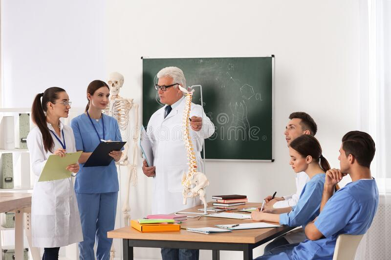 Medical students and professor studying human spine structure stock images
