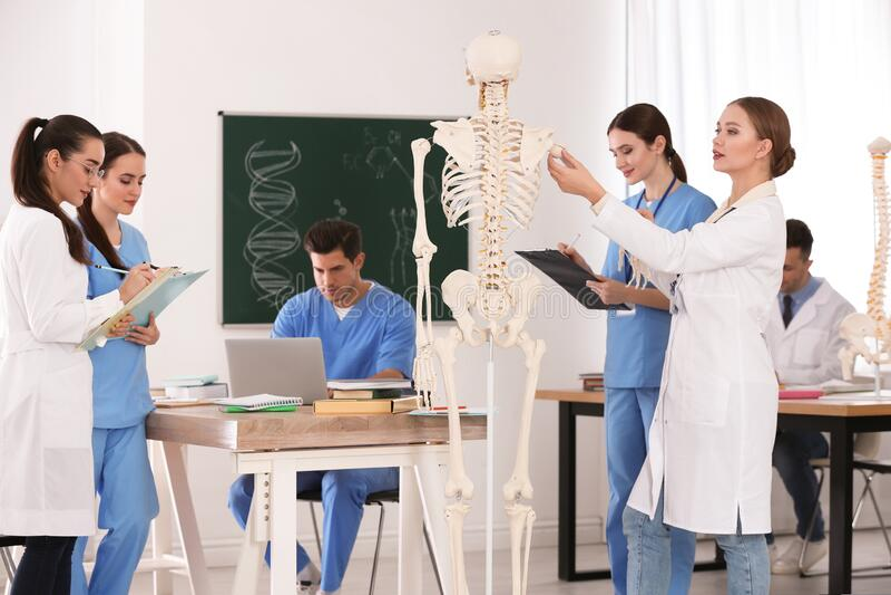 Medical students studying human skeleton anatomy stock image