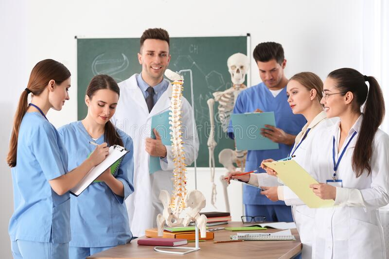 Medical students studying human spine structure royalty free stock photo