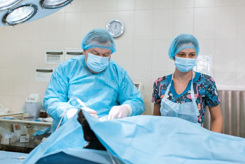 Medical team performing operation. Group of surgeon at work. Pet surgery stock photos