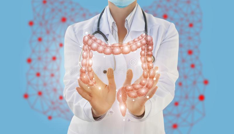 Medical worker shows the gut. The concept of treatment of the digestive system royalty free stock image
