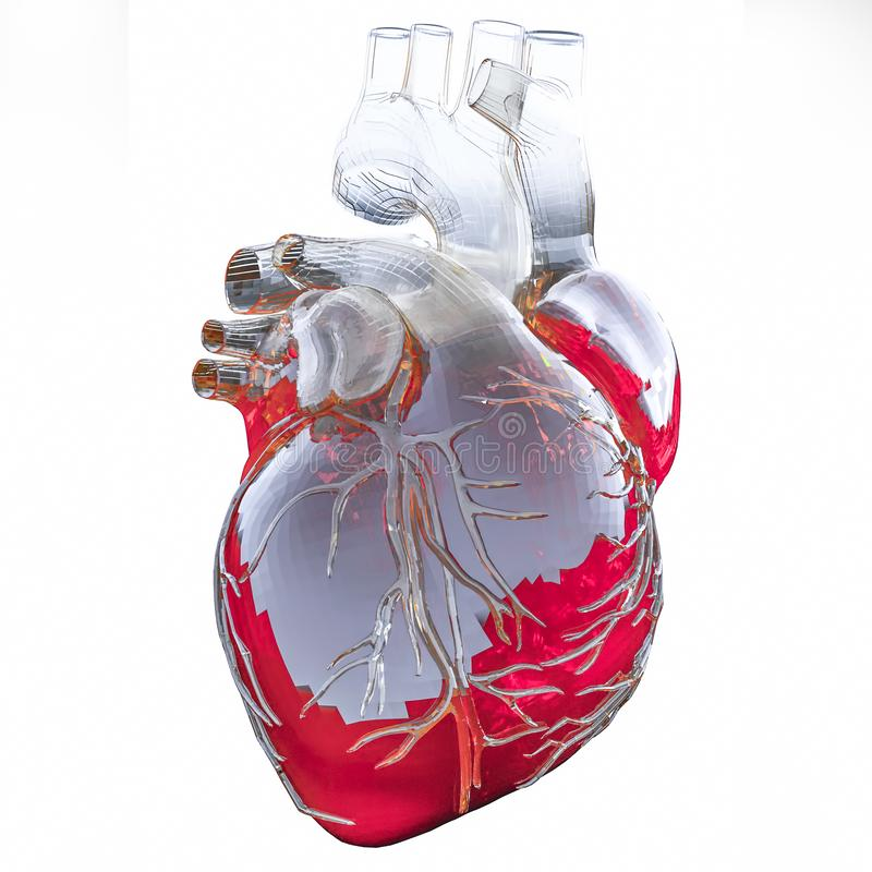 Medically accurate illustration of an artificial heart. 3D illustration.  vector illustration