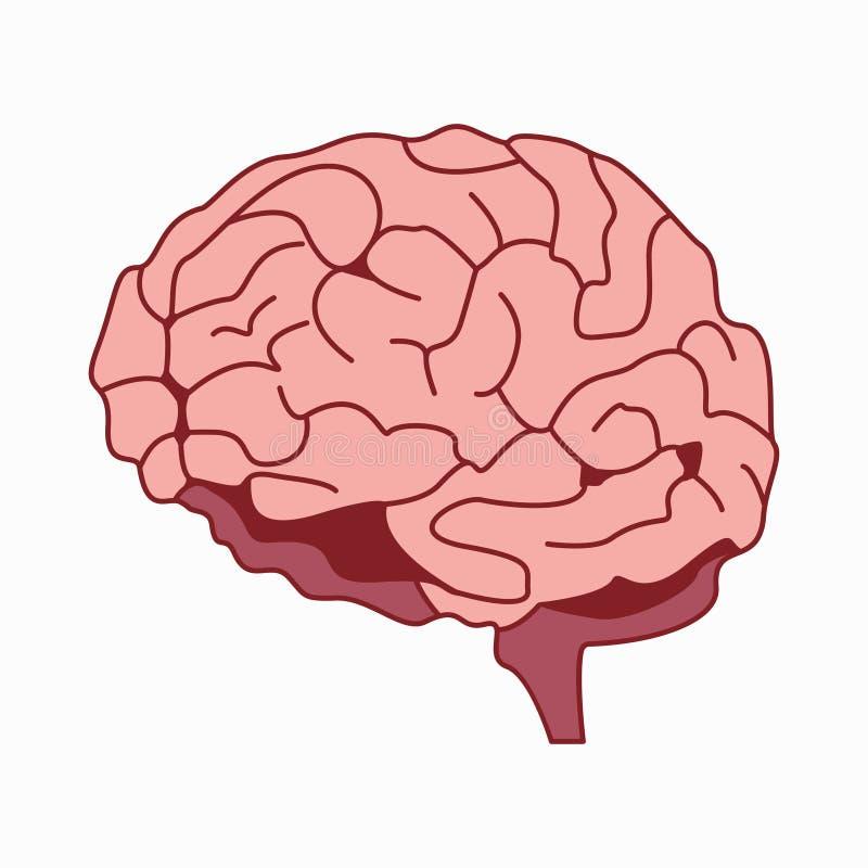 Medically exakt illustration av hjärndesignvektorn stock illustrationer