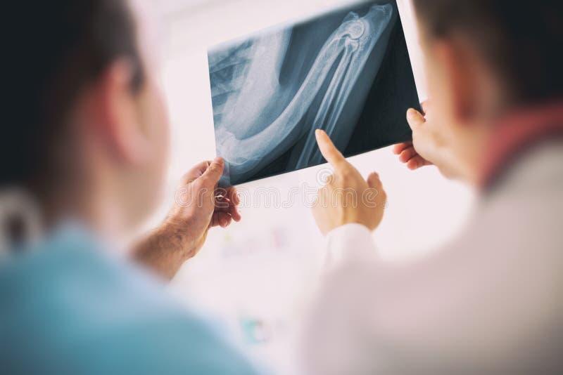 Medici del veterinario con i raggi x del rettile in clinica veterinaria immagini stock