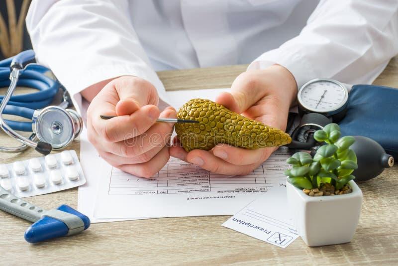 A medici il medico di appuntamento mostra a forma paziente della ghiandola del pancreas con il fuoco a disposizione con l'organo  fotografia stock