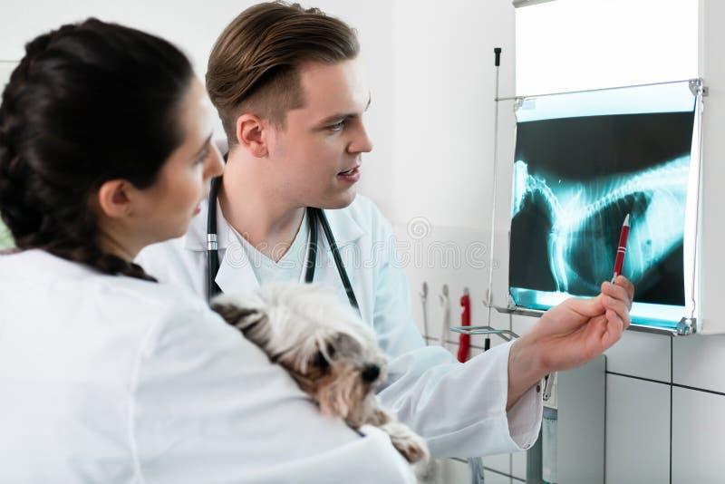 Medici veterinari che esaminano la radiografia dell'animale domestico immagini stock