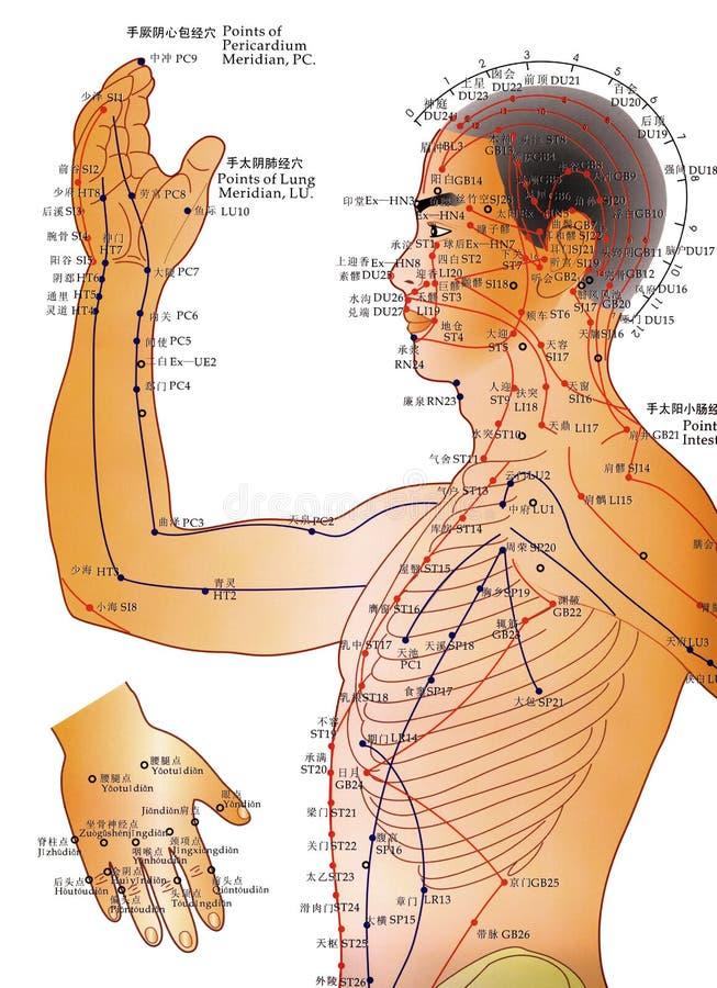 Medicina alternativa - carta de la acupuntura ilustración del vector