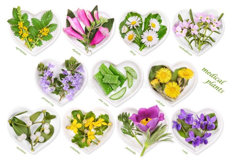 Medicina alternativa con le piante medicinali fotografia stock