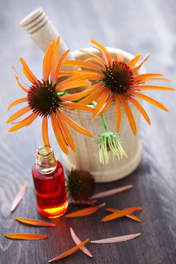 Medicina alternativa do Echinacea fotografia de stock royalty free