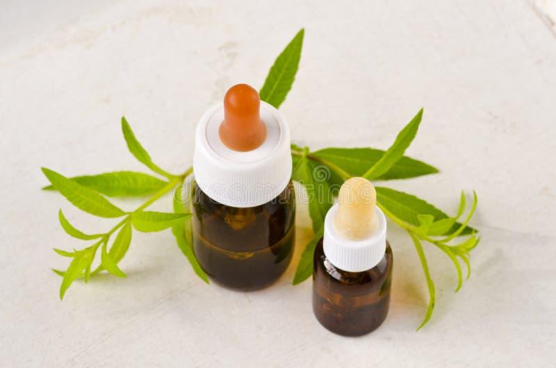 Medicina alternativa Olio essenziale della verbena del limone immagini stock libere da diritti